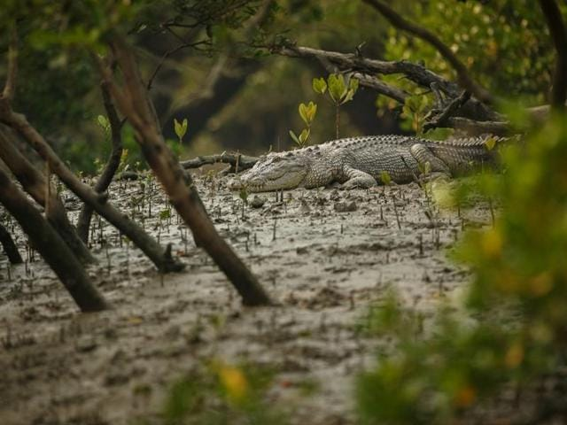 The prohibition aims to ensure safety of humans and provide congenial environs to the breeding crocodiles, said park officials.