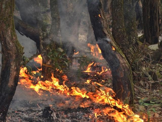 Massive forest fires sweeping across Uttarakhand have killed at least seven people in recent weeks.