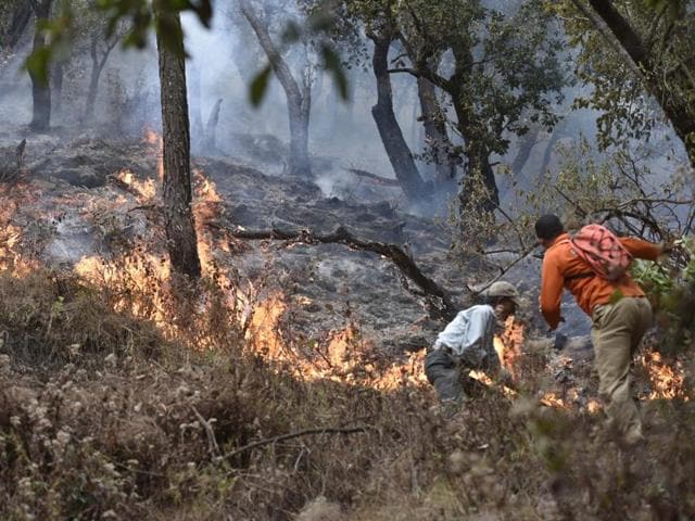 The blazes have razed over 2,900 hectares of lush Himalayan forestland in the past three months and killed at least four people.