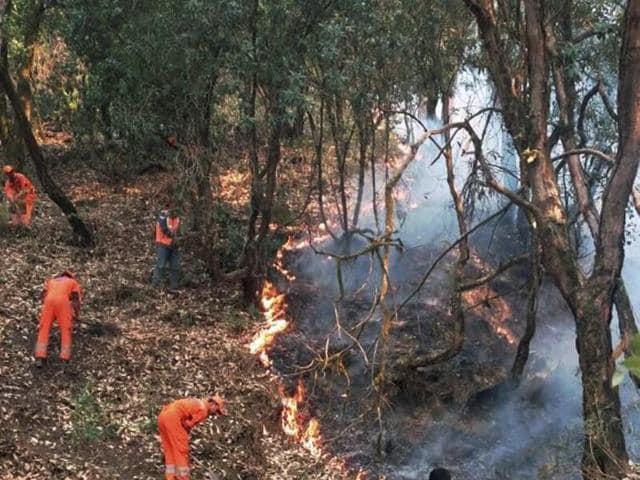 Uttarakhand,forest fire,BP Gupta