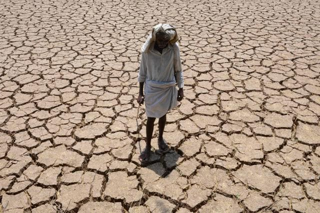A farmer on dried up cotton field in Telangana.