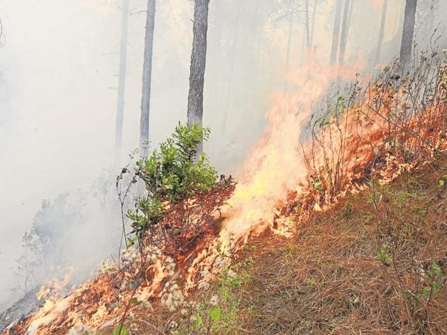 The DMMC on Thursday officially declared that no new forest fire incident occurred in the state.