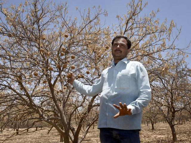 Sampat Jadav, a farmer, who lost his sweet lime crop at Navegaon village in Marathwada owing to the drought.
