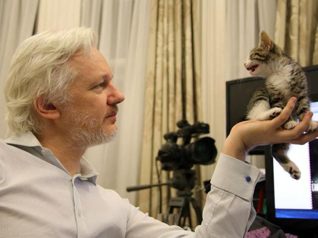 Julian Assange kitten