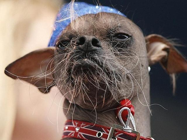World's Ugliest Dog,World's Ugliest Dog Hero,World's Ugliest Dog Hero Award