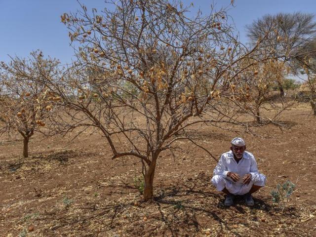 India drought,Supreme Court,Gujarat