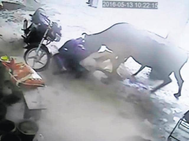 One of the attackers was injured when a cow, disturbed by the commotion, charged at them.((Screengrab))