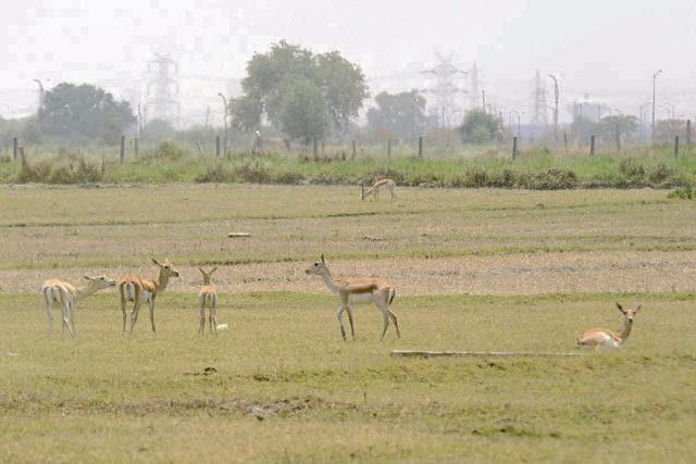 The HT team spotted nine deer in the Bil Akbarpur region on Saturday.(Burhaan Kinu/HT Photo)
