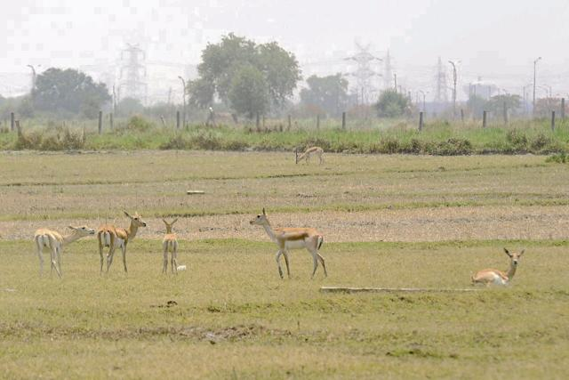 Flora and fauna in parched Bil Akbarpur wetland under threat