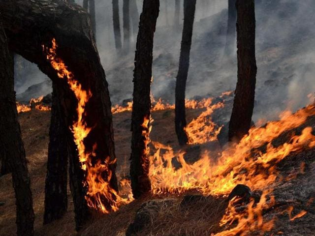 A massive fire broke out in forest areas of Bathuni and Gambr of the Rajouri forest division in Jammu and Kashmir.
