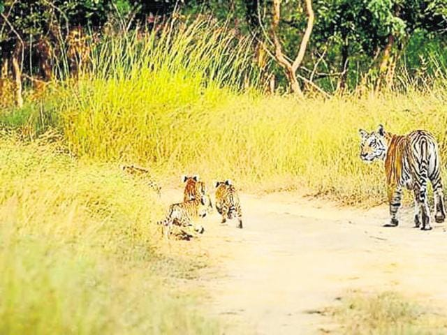 The NCTA found violation of laws in construction of tiger safari in Pench national park.