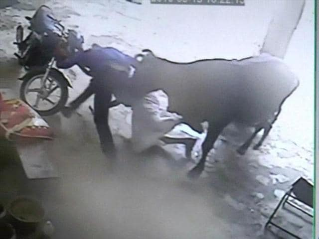 The police said one of the attackers was injured when a cow, disturbed by the commotion, charged at them.