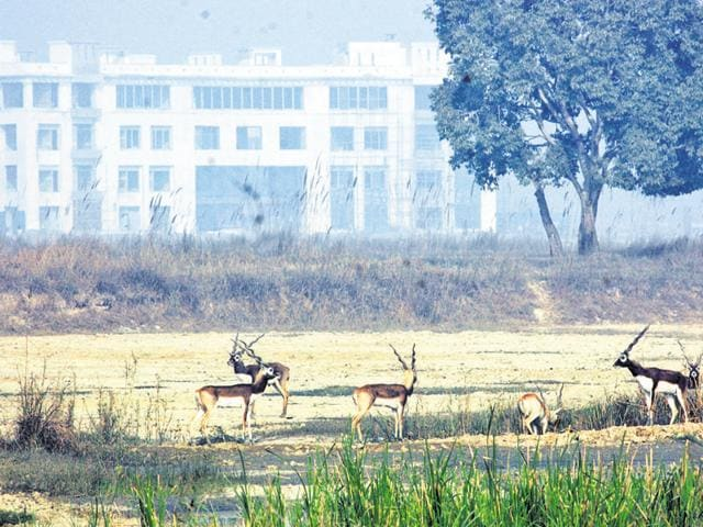 UP government's counsel has told the NGT that UP has 1,34,000 wetlands and it therefore cannot notify all of them in two months.(HT File Photo)