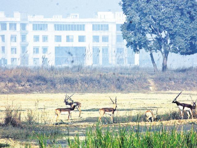 Noida,National Greet Tribunal,MoEF