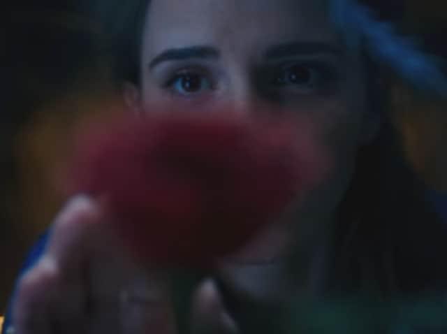 Emma Watson is 'the one.'