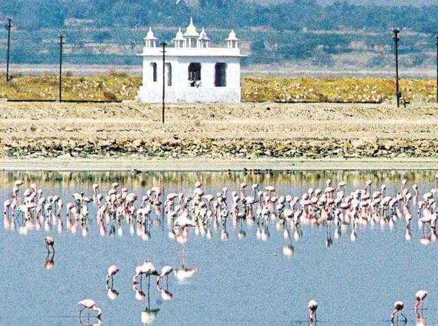 Sambhar is among the prominent wetlands of Rajasthan.