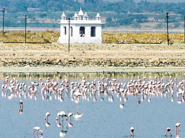Jodhpur,wetland,conservation