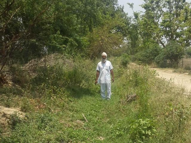 A farmer showing a weed-clogged irrigation drain Kotli Rajwaha in Patiala on Monday.