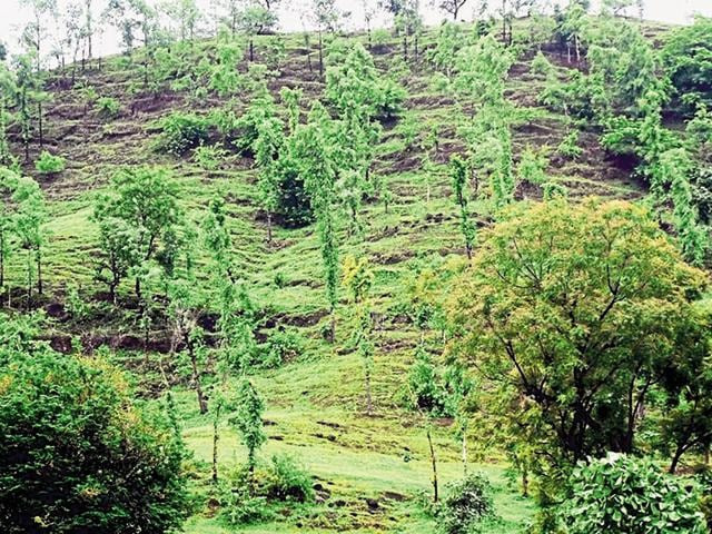 Rare medicinal plants and herbs are found in Keoti village in Rewa district and Jatashnkar in Chhattarpur district.