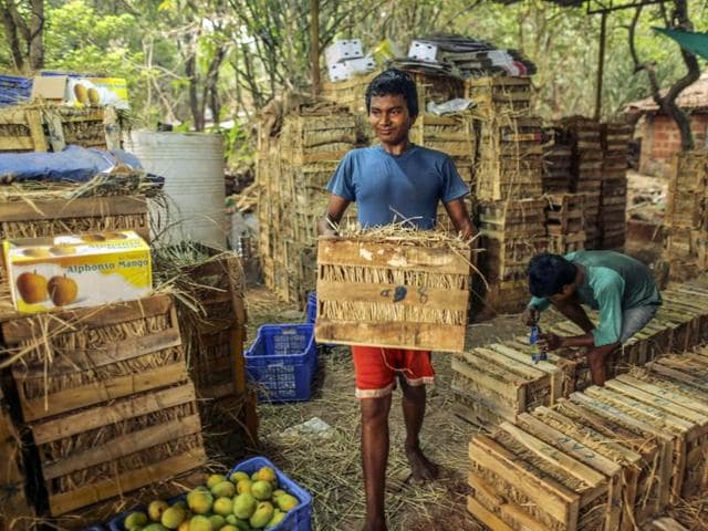 A worker carries a wooden crate of Alphonso mangoes in Ratnagiri
