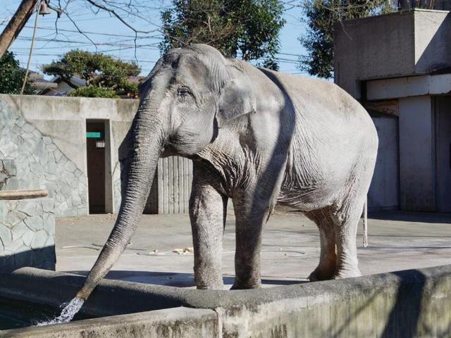 Oldest elephant dies