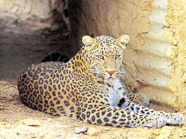 Dehradun,Uttarakhand,Man-animal conflict