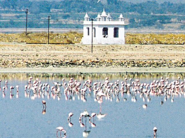 It is estimated that freshwater wetlands alone support 20% of the known range of biodiversity in India(Hindustan Times)