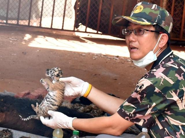 A dead tiger cub is held up by a Thai official after authorities found 40 tiger cub carcasses during a raid on the controversial Tiger Temple, a popular tourist destination which has come under fire in recent years over the welfare of its big cats, in Kanchanaburi province, west of Bangkok, Thailand.
