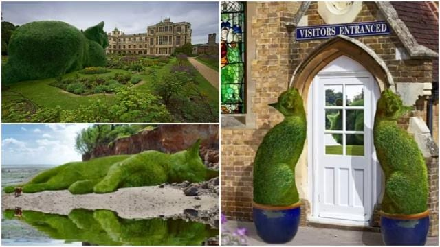 "A British artist's depictions of hedges and bushes stylised to look like a cat have gone viral on the Internet.The ""Topiary Cat"" series, by Richard Saunders, shows a giant, green cat in natural settings. Traditional English gardens are a recurring backdrop for the animal.Saunders made his first Topiary Cat in 2011 but his later works have been shared widely. Saunders said one of those recent images, depicting the feline drinking from a lake, was viewed at least three million times on Facebook.The creations are made from photographs of his beloved Russian Blue cat, Tolly, who died in February. Saunders said each new work can take up to three days to complete using Adobe Photoshop software"