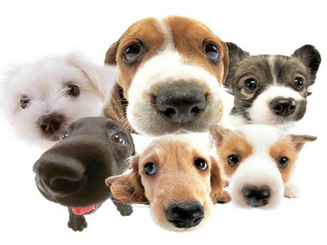 Dog,Pet Dog,Dog Games