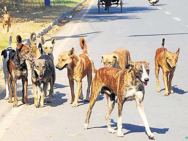 Gurgaon stray dogs,DLF Phase 2,Protection of Cruelty to Animals Act.