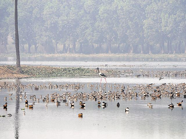 Environmentalists accused the Greater Noida authority of violating the Wetlands (Conservation and Management) Rules, 2010 and the Forest (Conservation) Act, 1980 at Surajpur wetland.