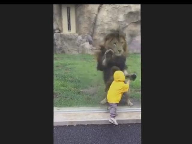 Lion,Japan zoo,Toddler