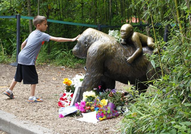 Visitors view a bronze statue of a gorilla and her baby surrounded by flowers outside the Cincinnati Zoo 's Gorilla World exhibit days after a 3-year-old boy fell into the moat and officials were forced to kill Harambe, a 17-year-old Western lowland silverback gorilla