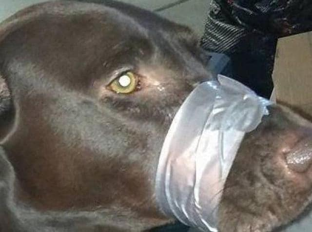 Katharine Lemansky  told the court in Wake County that the duct tape had only been on the dog for 15-20 seconds.