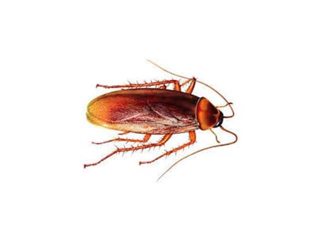 An emergency call centre in South Korea released a list  on Tuesday of the most ridiculous requests for help it has received, including one that concerned a particularly large cockroach.