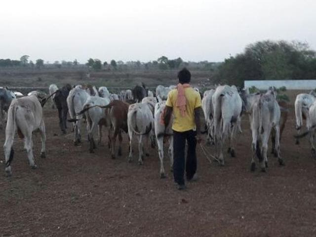 Jharkhand clashes over cattle