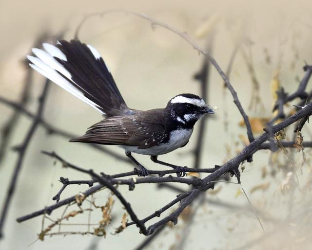 bird-watching,asola wildlife sancturay,summer birds