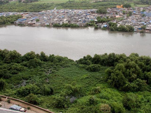 Thane mangroves