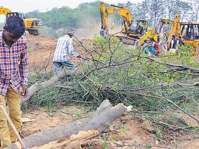 The order came on the NHAI petition whereby it had submitted that the blanket ban order was passed without taking into consideration that the NHAI had adhered to the statutory rules and regulations with respect to cutting and felling of trees.
