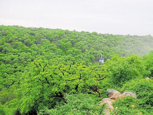 Mangar Bani is considered the last existing virgin forest area in Delhi-NCR.)
