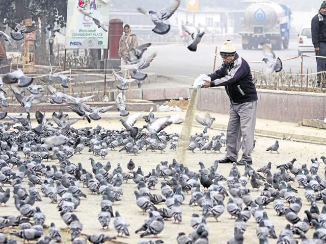 Pigeon feeding is a very common practice on the roads of Delhi.