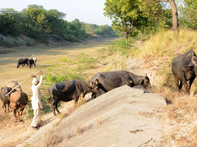 SYL route,Akalis,water issue