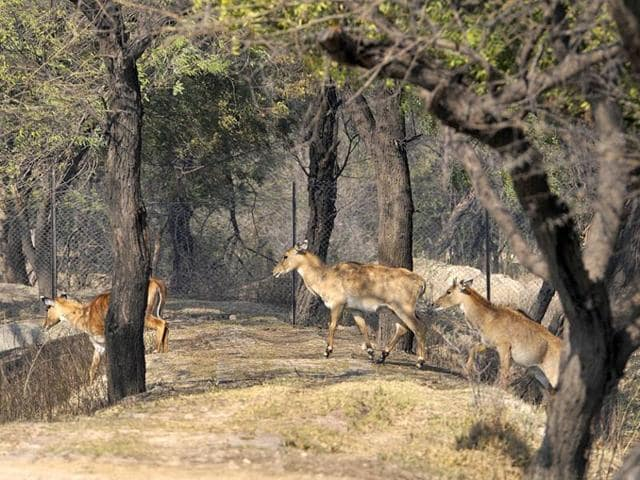 Over the last few months, the environment ministry declared as vermin nilgai (in picture)  in Bihar, wild boars in Uttarakhand and monkeys in Himachal Pradesh.