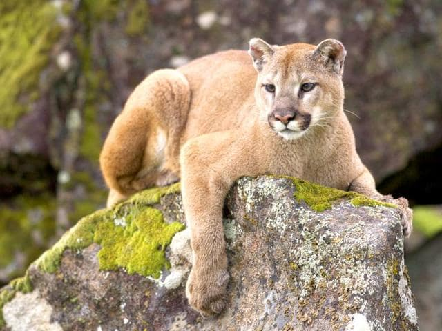 A woman in Colorado fought off a mountain lion that attacked her 5-year-old son