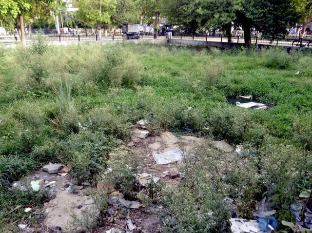 Garbage lying on a green belt at Ranjit Avenue in Amritsar on Sunday.