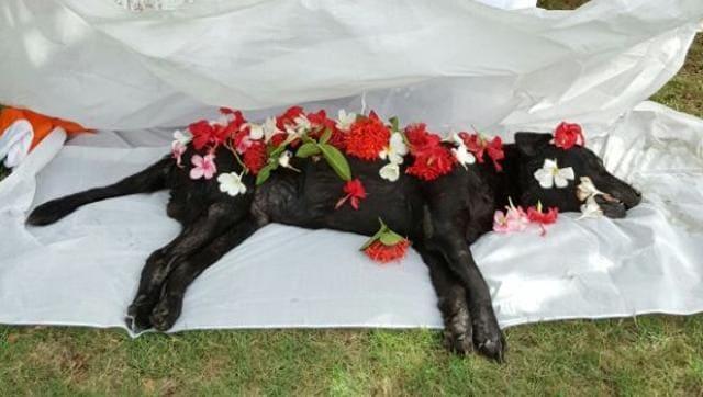 26/11 Mumbai Terror Attacks,Sultan,Sniffer Dog