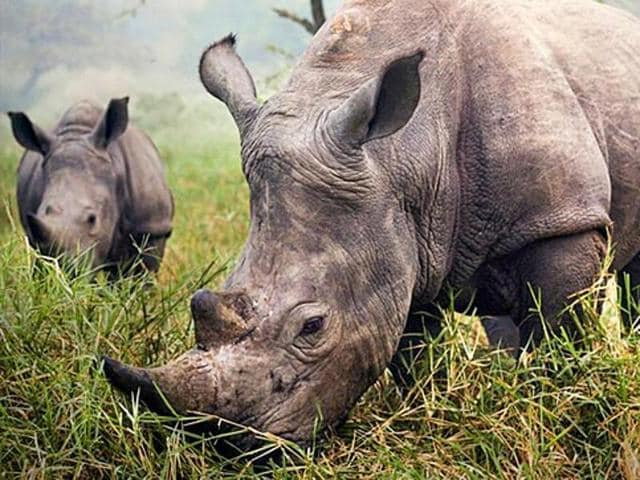 Poachers have killed and sawed off the horn of nine rhinos this year.