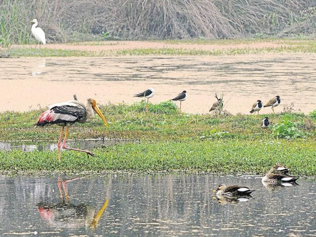 The park is proposed to be developed inside three forest reserves -- on 803 acres in Surajpur, 743 acres in Gulistanpur and 1,112 acres in Murshadpur.