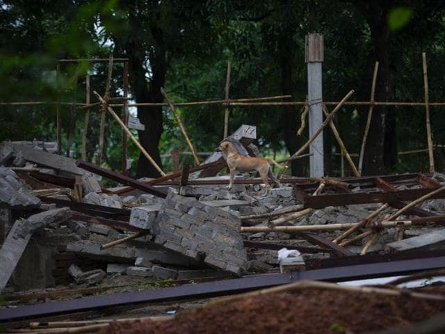 A dog stands on a destroyed building at Thuye Tha Mein village in Bago province after violence erupted when a mob of around 200 Buddhists rampaged through the area following an argument between neighbours over the building of a Muslim school.